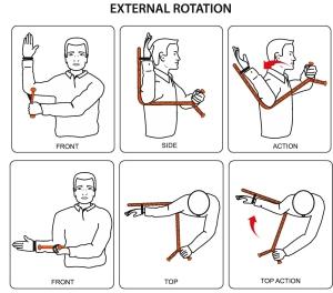 The Rotator (Demonstrating External Rotation)