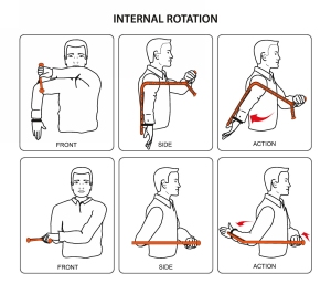The Rotator (Demonstrating Internal Rotation)